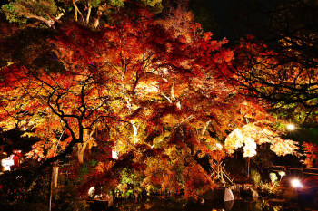 A image of Autumn colors garden illumination event