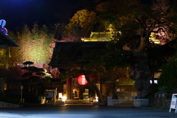 Overview of illuminated Hasedera Temple.