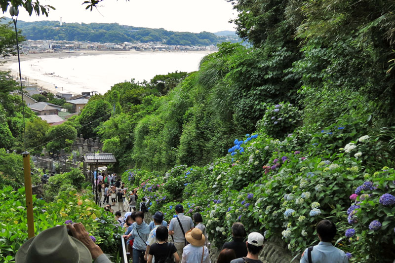 The famous hydrangea slope in Jojuin Temple.