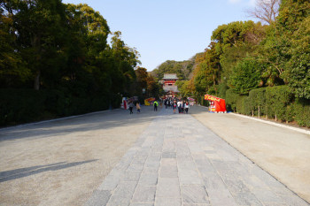 The long straight footpath in the precincts of Tsurugaoka Hachimangu, Kamakura.