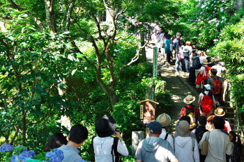 Entrance of hydrangea path of Hasedera Temple.