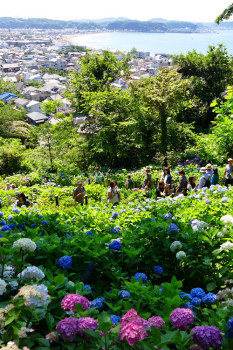 View from Hydrangea Path of Hasedera Temple.