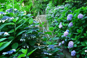 Path of hydrangea links to the dungeon.
