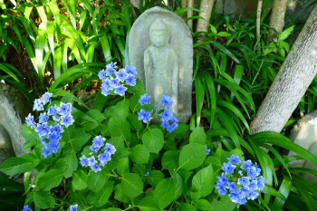Flowers and buddha statue in Hasedera's hydrangea path.