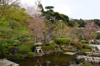 Japanese garden of Hasedera Temple.