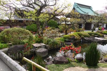 Lower garden of Hasedera Temple in April