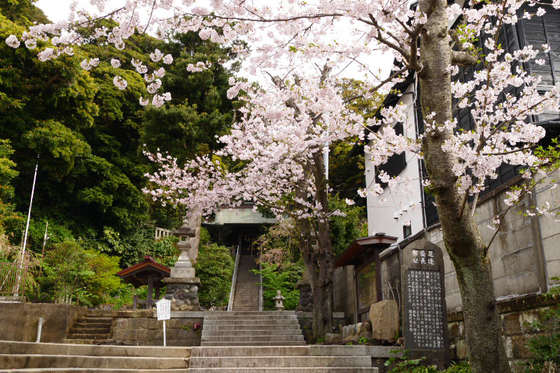 Cherry blossoms brightly colored the old little shrine.