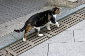A cat walking the slope way.