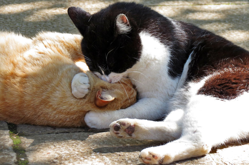 The cat which hugs a friend