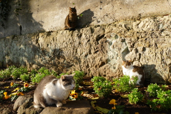 New year cats meeting in Enoshima