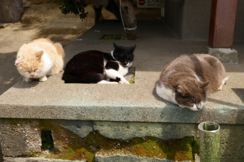 Cats gather at the side of small temple.