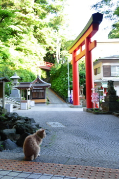 A cat watching a man at side of Enoshima Jinja Shrine.