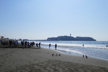 Dragnet fishing is held on sometime in Katase Nishihama Beach.