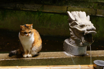 A cat sitting aside of dragon head shaped faucet.