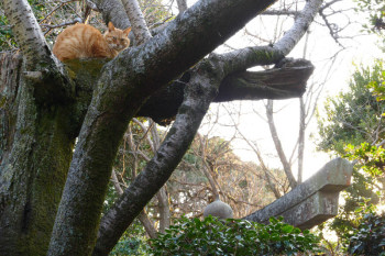 A cat resting on a tree.