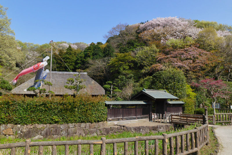 The mountain where there is an old Japanese-style house is actually near the center of Fujisawa city.